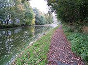 A quiet, leafy part of the canal in Burnley