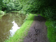 Muddy towpath and overhanging trees made this stretch difficult (and fun)