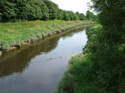 The River Douglas close to the canal